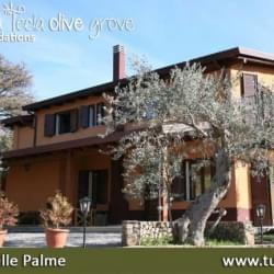 Santa Tecla Olive Grove Casa Degli Ulivi